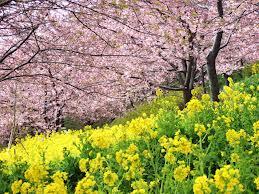 春日井 税理士